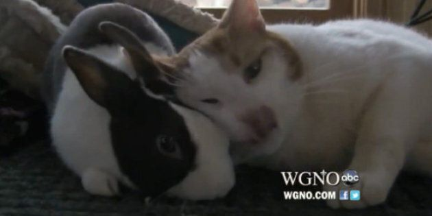 Cat and Rabbit, Best Friends Forever: Top Videos Of The Week