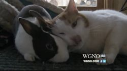 WATCH: Cat and Rabbit, Best Friends Forever And Other Top Videos Of The