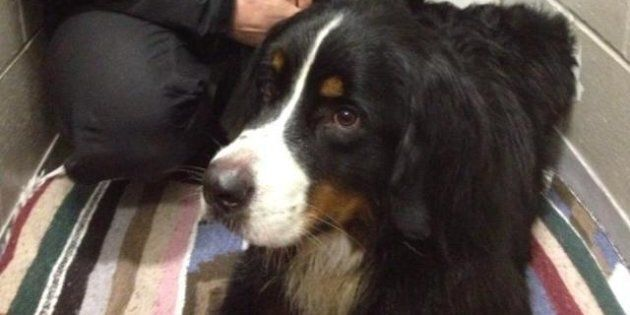 Ohly Found On Mount Seymour: Dog Reunited With