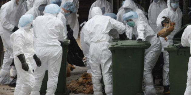 Bird Flu: Chinese Man Killed By H5H1 Strain That Came From Poultry, Not Human Transmission: