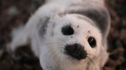 Lost For The Holidays, Seal Spends New Year's Eve In