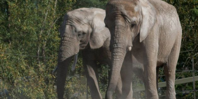 Toronto Zoo At Risk Following Elephant Transfer