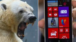 Man's Phone Thwarts Polar Bear