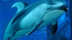 How A Vancouver Aquarium Icon