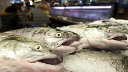 First Nation Probed Over Massive Sockeye Salmon