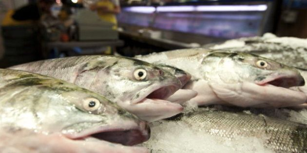 First Nation Salmon Fishery Investigation Focuses On Huge Illegal Sockeye