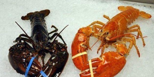 Rare Orange Lobster Sent To Nature Centre Instead Of