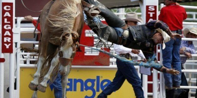 Horse Euthanized After First Day Of The Calgary