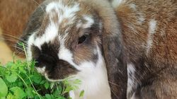 20 Rabbits Crushed By B.C. Sanctuary