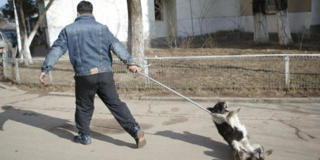 Bucharest, ROMANIA: An employee of the Animal Survey Administration tries to catch a stray dog by a lasso...