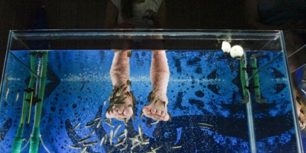 Fish Pedicures Banned By Vancouver Island