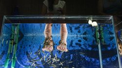 Fish Pedicures Banned In Vancouver