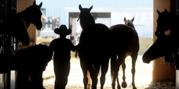 Calgary Stampede: Chuckwagon Driver Gets Record Fine After Horse