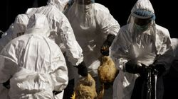 Bird Flu Study 'Censorship' To Be Addressed By