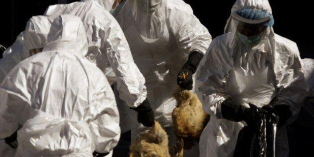 Bird Flu: WHO Will Help Solve Controversy Over U.S. Blocking