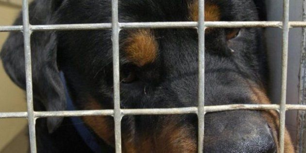 31 Dogs Rescued From Durham Breeding