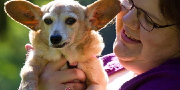 Canada's Oldest Dog? Midge The 'Chiweenie,' A Chihuahua-Dachshund Cross, Still Chipper At