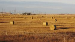 Farmers Vote To Keep Wheat Board