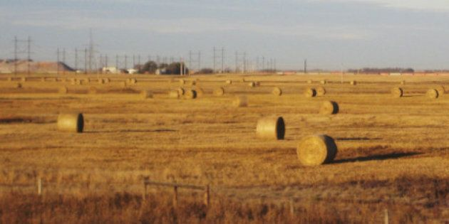 Wheat Board Monopoly: Farmers Vote To Keep Monopoly, Government Vows To Eliminate
