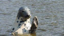 Cull Seals, Help Fish: