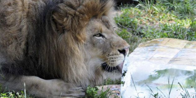 Hot Weather: Animals Find Ways To Stay Cool