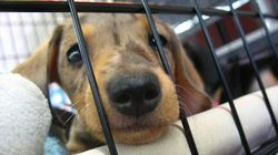 Over 500 Malnourished Dogs Seized From Quebec Puppy