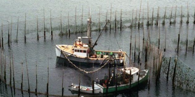 3 N.B. Fishermen Plucked From Burning