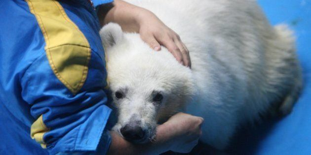 'Polar Bear Technician' Might Be The Most Canadian Job Title