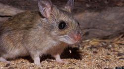 Staff In Face-Chewing Mice Scandal