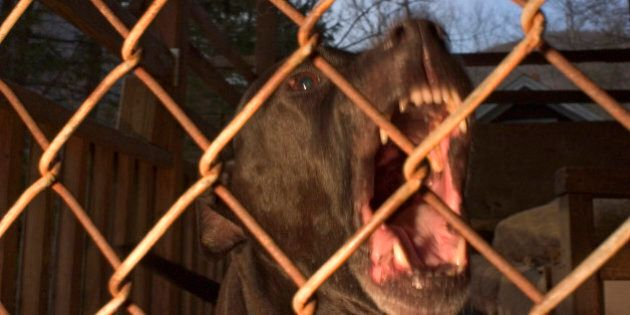 Pit Bull Attacks Raise Calls For Tough Restrictions