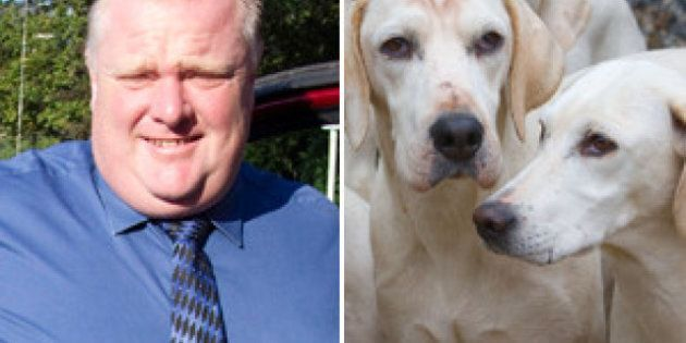 Rob Ford: Dogs Off Leash Latest Target For Toronto's