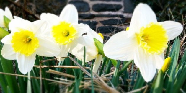 Get Into Gardening Mode With Spring