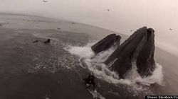 WATCH: Divers Narrowly Escape Being