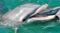 Dolphins Call Each Other By