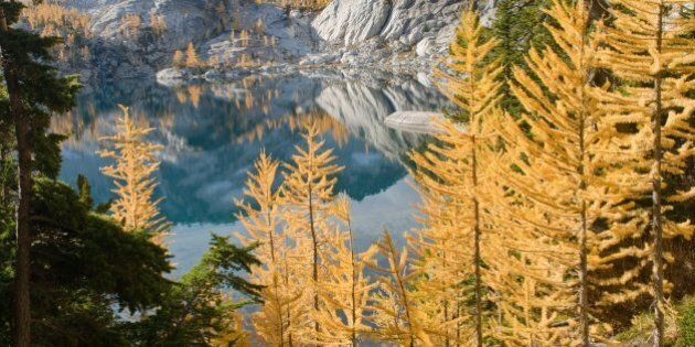 Free Bus Service In Banff, Lake Louise For Autumn Colour