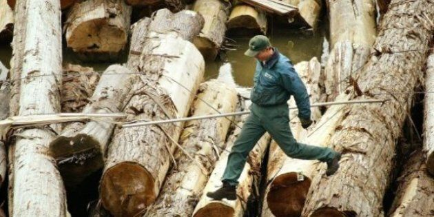Softwood Lumber: Canada And U.S. Agree To Extend