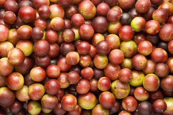 Camu Camu Benefits 11 Things You Need To Know About The Fruit Huffpost Canada Life