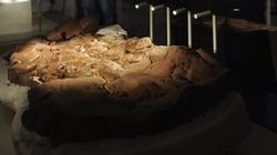 Canadian-Led Team Discovers Ancient Dinosaur