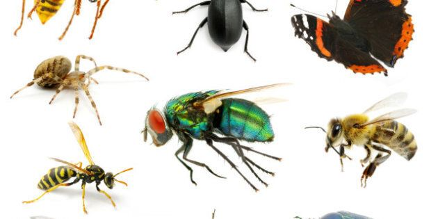Good Bugs For Your Home: The Insects You Should Avoid Killing