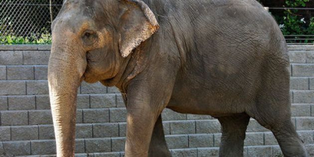 Lucy The Elephant: Alberta Appeal Court Sides With Edmonton In Fight To Move Her To