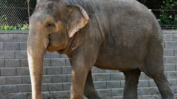 Courts Won't Help Lucy The Elephant Move To