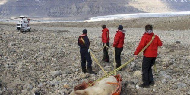 Polar Bear Attack Norway: British Student Dead, Four Others Injured In Longbearyen, Norwegian