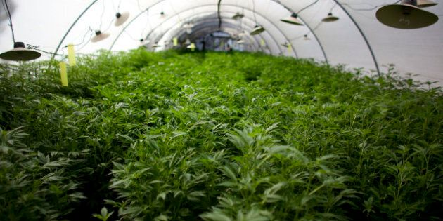 Sechelt Marijuana Grow Ops: B.C. Region Mulls Draft Bylaw To Allow Large Commercial