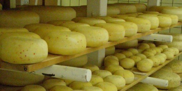 Gort's Gouda Cheese Caused E. Coli Death, Medical Official