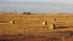 Farmers Speak Out Against Ending Wheat Board