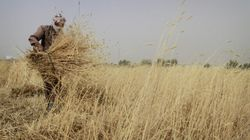 Food Prices Moving Toward 'Tipping Point' Of Global