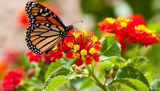 Spring Gardening Trends: Build A Butterfly Garden