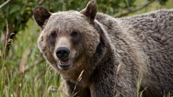 NHLer's B.C. Grizzly Kill