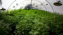 Legal Marijuana Grow Ops Get Boost In