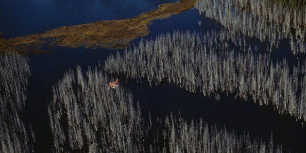 CANADA - OCTOBER 19: Dead white trees were drowned by the formation of this reservoir, Kenney Dam Reservoir,...